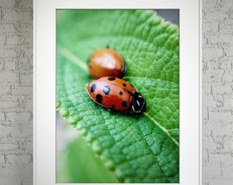 "Sleeping Ladybugs 11"" x 14"" Color Photo Print Posterboard"