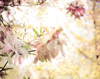magnolia tree photography - pastel floral wall art - magnolia flower print - magnolia decor