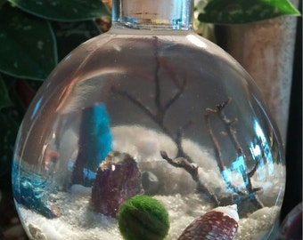 Marimo Bottle Garden Terrarium Kit by Midnight Blossom - Underwater Terrarium w/ living japanese moss ball, sand, pebbles, shells, sea fan.