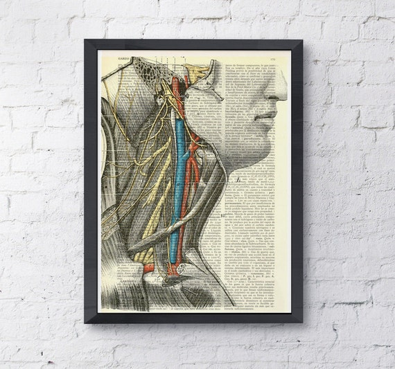 Summer Sale Art Print color neck study, Anatomy art prints, wall art, print color neck veins, head art, doctor office gift SKA056