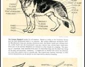 German Shepherd Dog Anatomy Print Sketch, R E Lougheed, Vintage Dog Illustration, Dog Sketch, Wall Decor, Dog Tails
