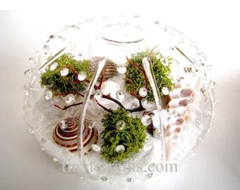 Glass Urchin Beach Lichen Terrarium: White, Natural or Black Sand