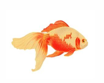 Goldfish 2 Portrait Orange Yellow Nautical Vintage Style Art Print Fish Koi Gold Fish Beach House Decor