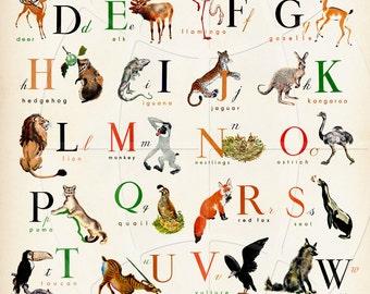 English Alphabet  - Wonderful Animal  Alphabet Print -16x20 inch - Great baby Shower Gift