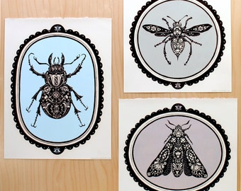 Bug Collection || Stag . Moth . Hornet