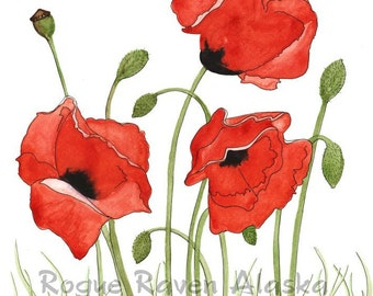 Red Poppies - Print of 3 Red Poppies with Stark, White background