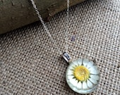 Real Daisy Flower Pendant Resin Necklace Dried Pressed lead and Nickel Free Sterling Silver terrarium