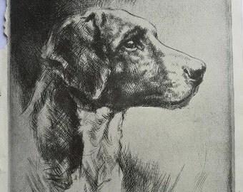 WESTON HARRIER HOUND dog print Vintage 1935 hound dog bookplate Unique collectors gift, birthday, anniversary dog lover present