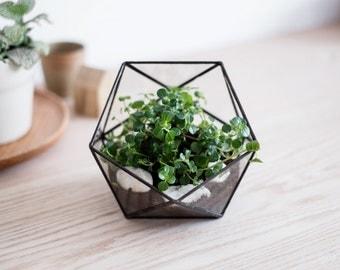 "FREE SHIPPING - geometric glass terrarium ""icosahedron"" - handmade glass terrarium - planter for indoor gardening"