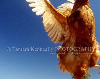 Chicken Art - Vegan Art - Animal Rights - Chicken Wall Art - Chicken Lover - Vegan Decor - Farmhouse decor - Chicken Decor - Photography