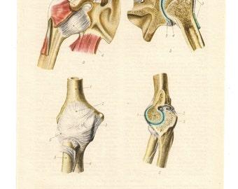 bones vintage old page anatomical print anatomy human body medical anatomic skeleton bone blood biology