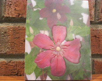 "Encaustic Photography ""Clematis"""