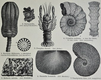 The Triassic. Fossils. Paleontology.Old book plate,1897. Antique illustration. 117 years lithograph. Natural history  print. 9'2 x 6 inches.