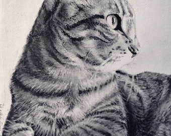 Custom portrait drawing of pet/animal from your photo; 5 x 7 inches, commissioned, charcoal, original drawing, cat art, kitten, hand-drawn