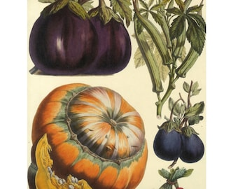 Paris Vegetable Print on Heavy paper Book Plate Sale, Buy 3, get 1 free