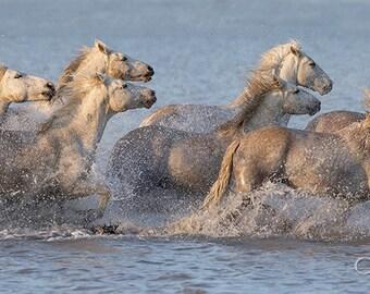 Morning Water Run - Fine Art Horse Photograph - Camargue - Horses