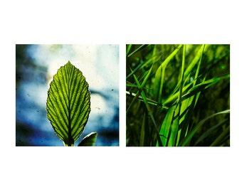 Peaceful art, nature photography set, green art set, leaf art, grass art, set of 2 prints, 8x8, 10x10, 12x12 print set