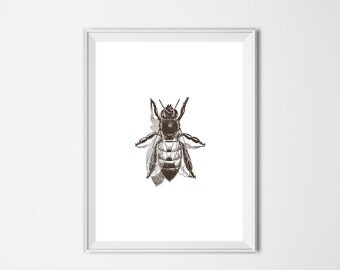 Bee Print, INSTANT DOWNLOAD, Insect Printable Art, Minimalist Decor, Vintage Illustration Brown, Nursery Decor, Honey Bee, Bumble Bee Print