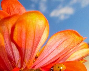 Ladybug,Instant Download,Photo,Fine Art Photography,Decor,Digital,Large Format,Flower,High Resolution,Girl,gift,theme,idea,nature,