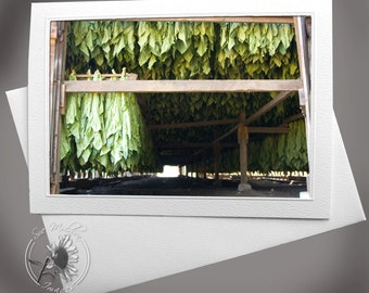 Photocard: Open Tobacco Shed Interior