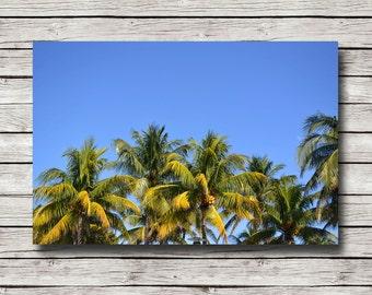 Wall Canvas Photograph - Poster Print - Modern Wall Art - Miami Florida Blue Sky Palm Trees Nature Sunset Beach - Landscape - Photo Print