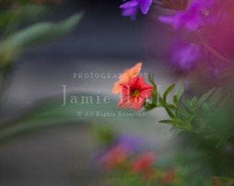Floral Macro Fine Art Photography