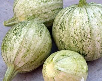 Ronde de Nice Summer Squash Heirloom Seeds - Non-GMO, Open Pollinated, Untreated