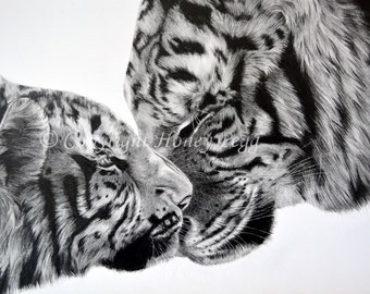 Tigers Fine Art Limited Edition Print. A3 (420mm x 297mm)