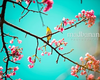 Cherry Blossoms & The White Eyed Bird Standout Print