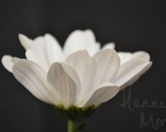 White flower photograph print 12x8