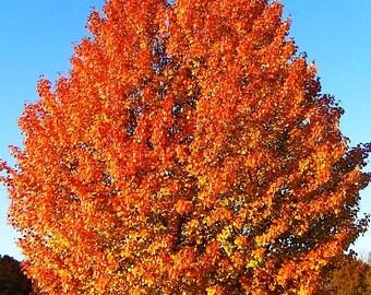 Iowa Autumns