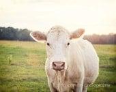 cow photography, rustic home decor, farm animal, farm photography, farm nursery art, country wall art, animal photography, The Cow