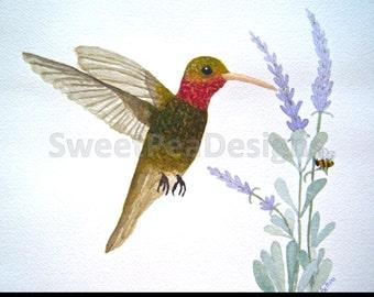 Ruby Throat hummingbird lavender and bee original Watercolor Painting