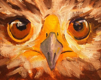 Bird Portrait Painting, Original Oil, Small 4x6 Canvas, Hawk Eyes, Closeup, Animal Face, Feathered Creature, Woodland, Wild, Wall Decor