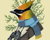 Cedar Waxwing Bird art print by Ryan Berkley 8x10