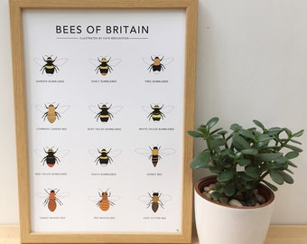Bees of Britain print - illustrated wildlife poster - bumblebee , honey bee - nature wall art