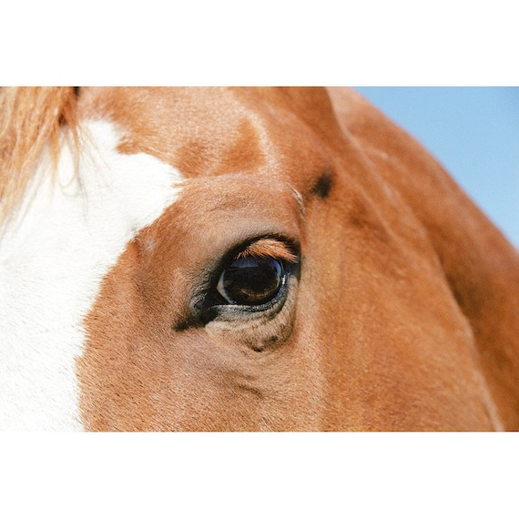 Horse Photo - Cinnamon Eye - Fine Art Photograph - Horse Eye Photo - Animal Photo - Nature Print - Horse with Blaze Photo - Horse Wall Art