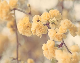 Yellow Flowers Photography, Cottage Chic Decor, Yellow Roses Photo, Spring Flowers, Large Wall Art, Flower Print, Beige, Yellow, Nursery Art