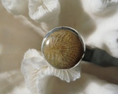 Beautiful Fossil Coral Ring Size 7