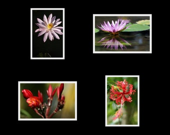Bali Flora - 3.5 x 5 photo cards set prints with blank cards and envelopes, colorful nature macro photography exotic flowers Bali Indonesia