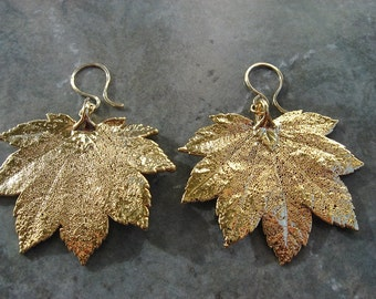 Real Leaf Earrings - 24k Gold - Full Moon Maple