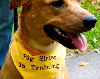 Big SISTER In Training Dog Bandana COLLAR Style Sizes S to XL Choice of Fabric