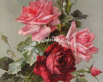 French Victorian Roses Bouquet Print Catherine Klein Half Yard Long Cabbage Rose