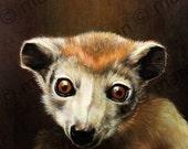 Lemur postcard 6-pack