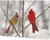 50 Greeting Cards Snowy Cardinals Male & Female Art Photo Christmas Holiday Cards w/ Envelopes