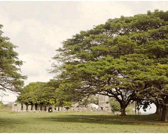 Hawaiian Fine Art Canvas wrap -Big Trees -Island Landscape