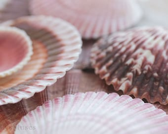 Seashell Art Photograph, Nautical Decor, Ocean Still Life Photo, Beach Cottage  Decor, Surreal Still Life, Seashell Macro Art, Pink Brown