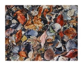 Watercolor Leaves Painting- Fall Leaves- Hidden Treasure- Diamond In The Rough 3- 11x14- FIne Art- Recognition