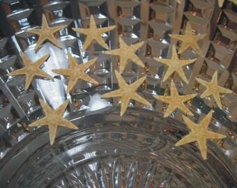 Private Listing for idoWhereTheRoosterCrows Mini Starfish -  Starfish Sea Stars