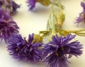 Dried Cornflowers, Lavender, Cornflowers, Bachelor Buttons, Centaurea Cyanus, Real Flowers, Edible, Flower, Decorations, Lavender, Herb,Tea